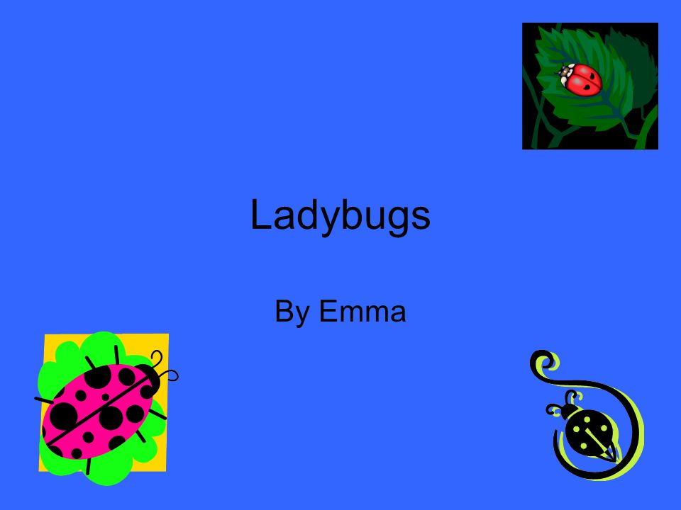 Ladybugs By Emma