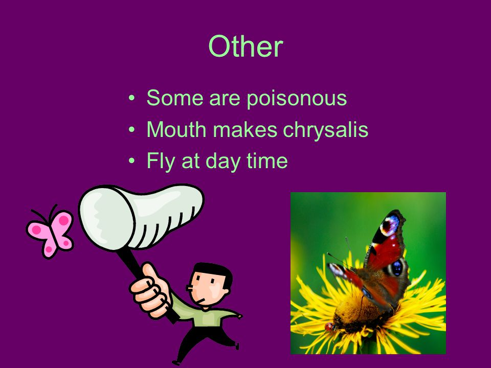 Other Some are poisonous Mouth makes chrysalis Fly at day time