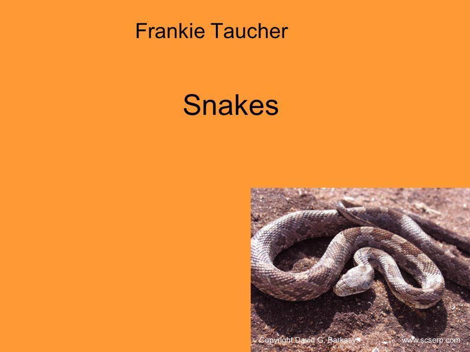 Frankie Taucher Snakes