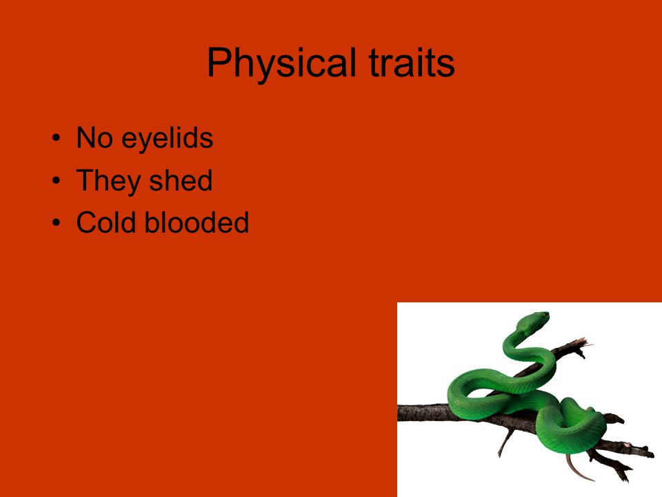 Physical traits No eyelids They shed Cold blooded