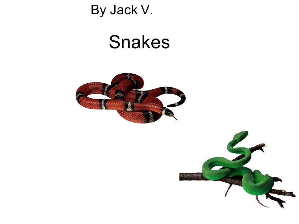 By Jack V. Snakes