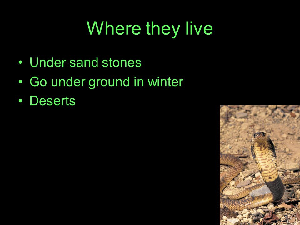 Where they live Under sand stones Go under ground in winter Deserts