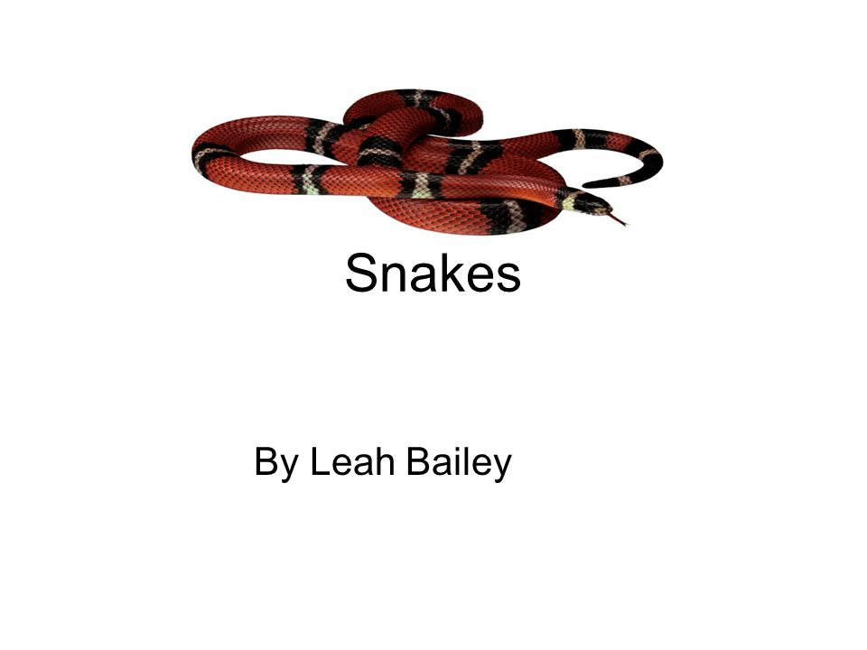 Snakes By Leah Bailey