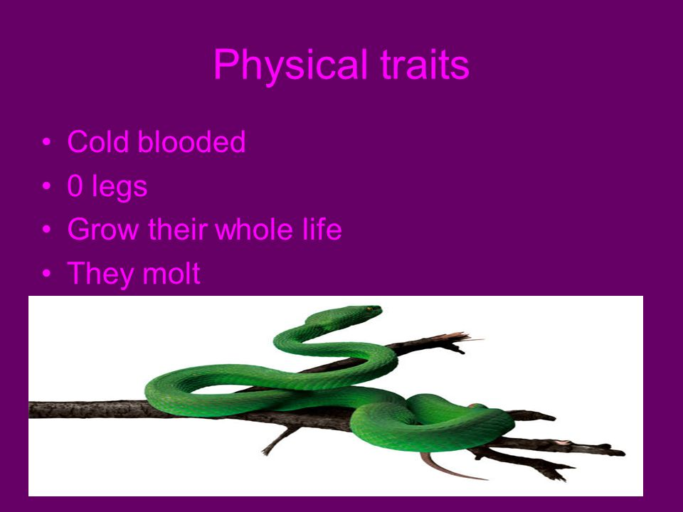 Physical traits Cold blooded 0 legs Grow their whole life They molt