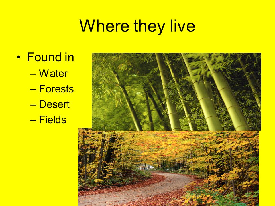 Where they live Found in Water Forests Desert Fields