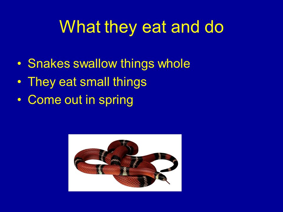 What they eat and do Snakes swallow things whole They eat small things