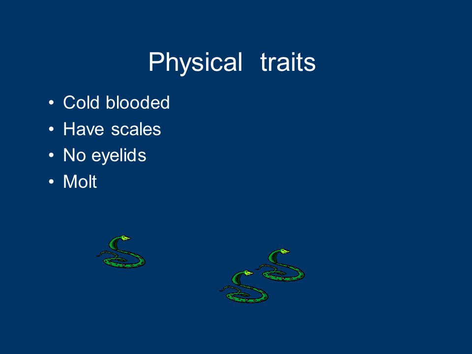 Cold blooded Have scales No eyelids Molt Physical traits