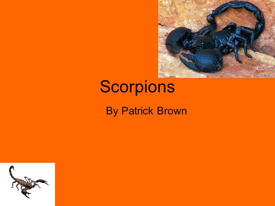 Scorpions By Patrick Brown
