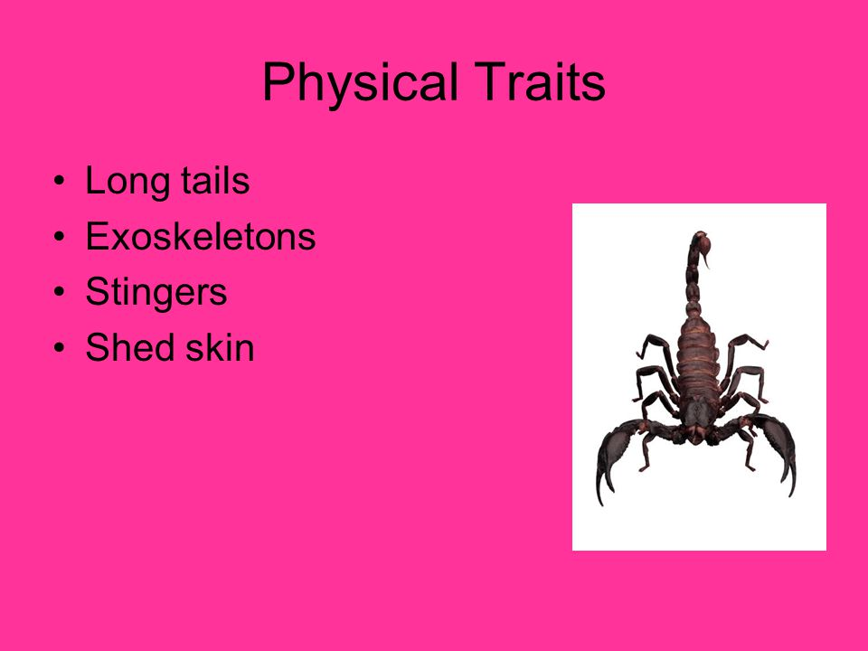Physical Traits Long tails Exoskeletons Stingers Shed skin