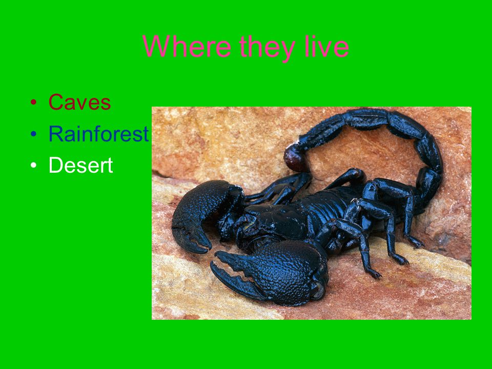 Where they live Caves Rainforest Desert