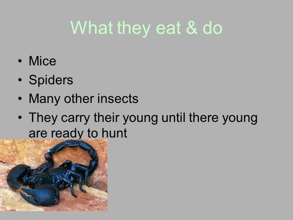 What they eat & do Mice Spiders Many other insects
