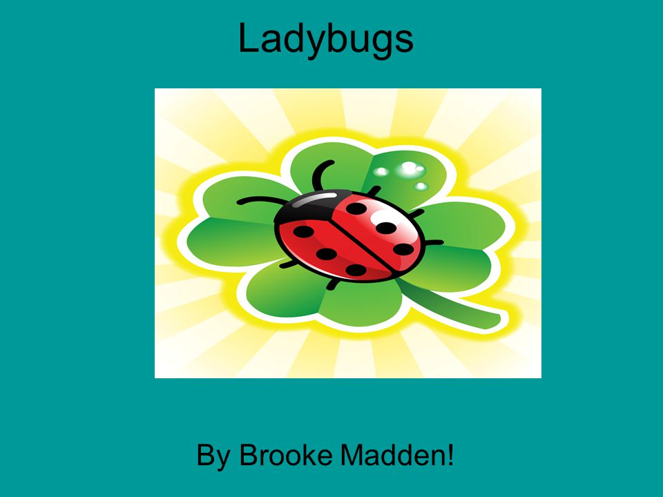Ladybugs b By Brooke Madden!