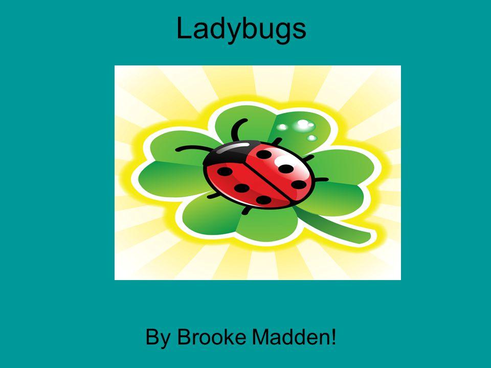 Ladybugs b By Brooke Madden!