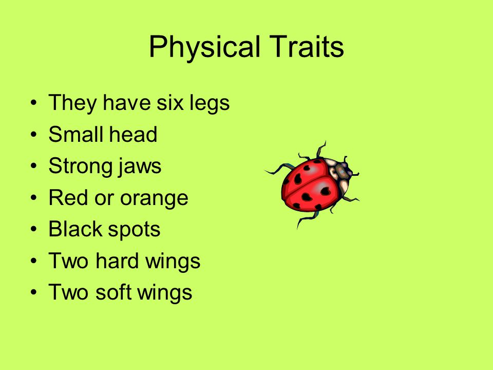 Physical Traits They have six legs Small head Strong jaws