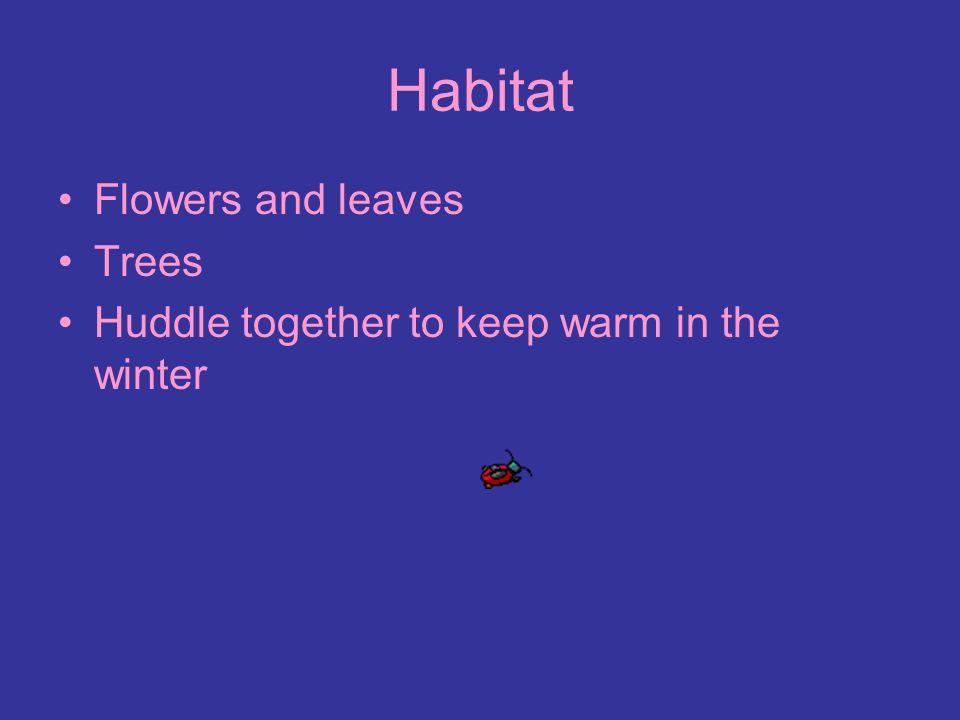 Habitat Flowers and leaves Trees