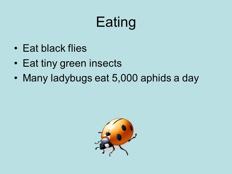 Eating Eat black flies Eat tiny green insects