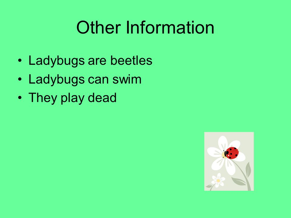 Other Information Ladybugs are beetles Ladybugs can swim
