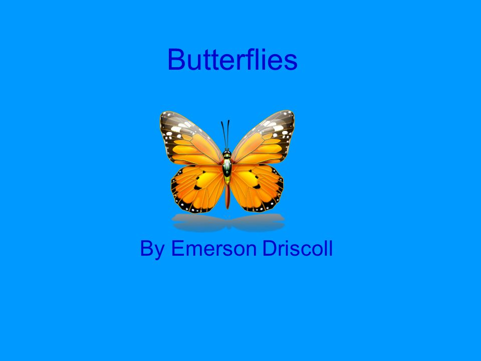 Butterflies By Emerson Driscoll