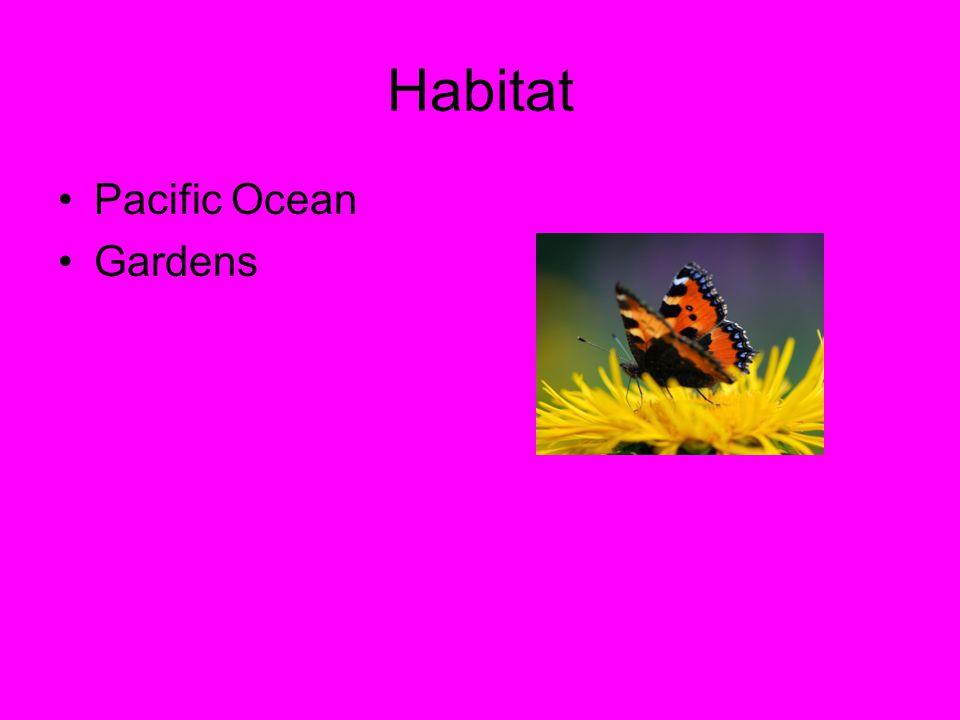 Habitat Pacific Ocean Gardens