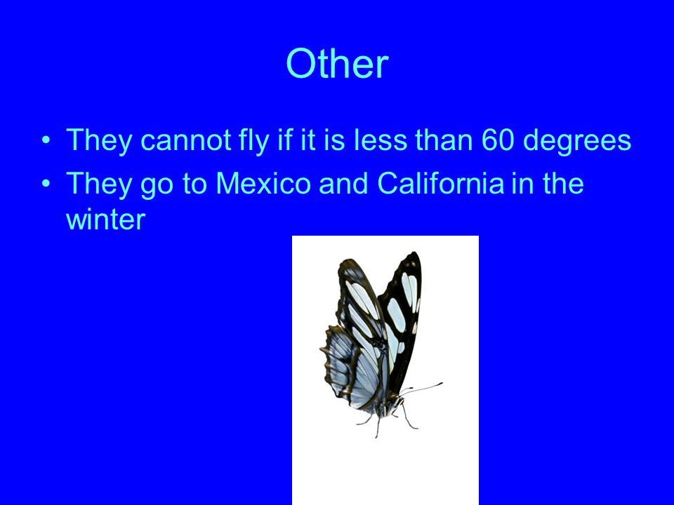 Other They cannot fly if it is less than 60 degrees
