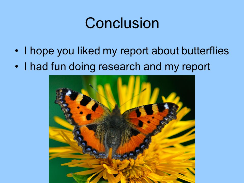 Conclusion I hope you liked my report about butterflies