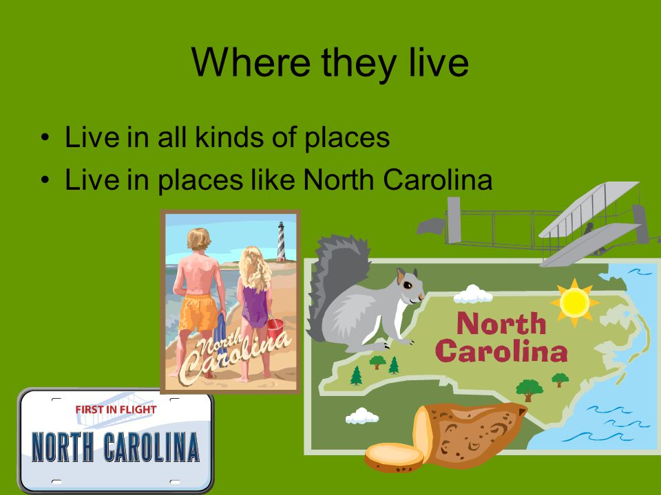 Where they live Live in all kinds of places