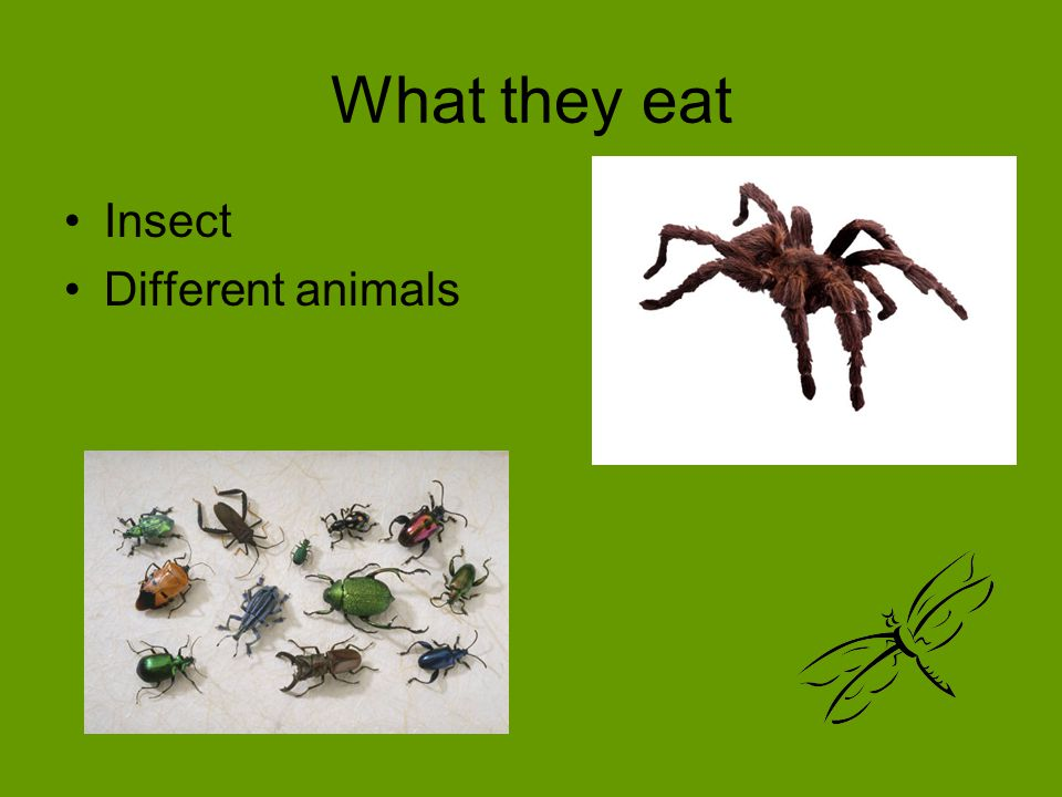 What they eat Insect Different animals