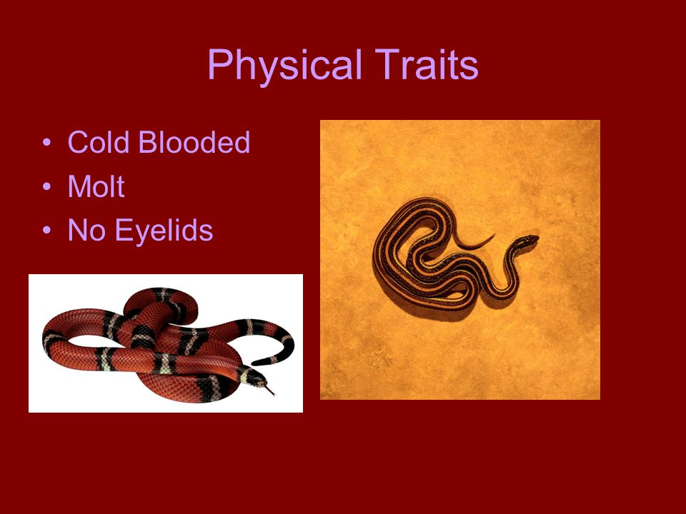 Physical Traits Cold Blooded Molt No Eyelids