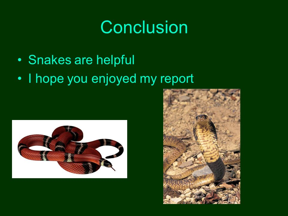 Conclusion Snakes are helpful I hope you enjoyed my report