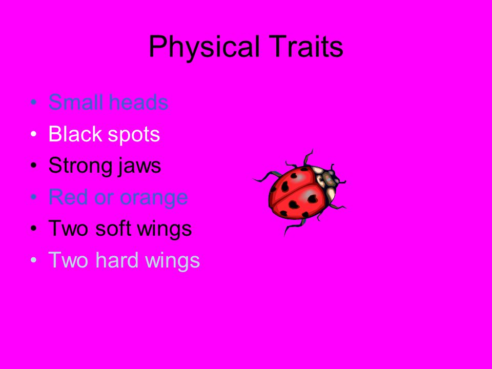 Physical Traits Small heads Black spots Strong jaws Red or orange