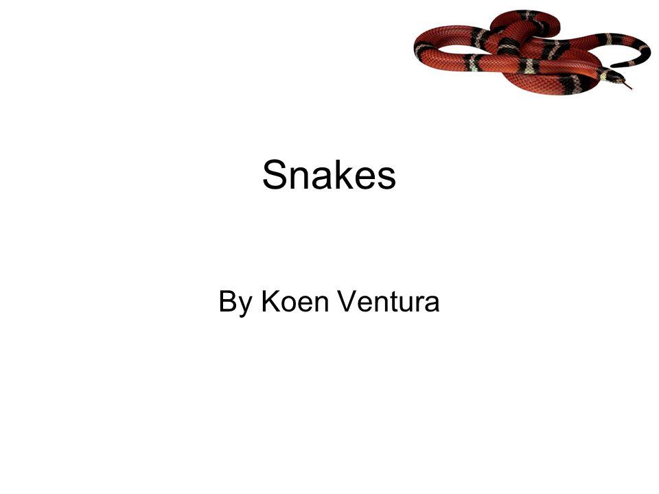 Snakes By Koen Ventura