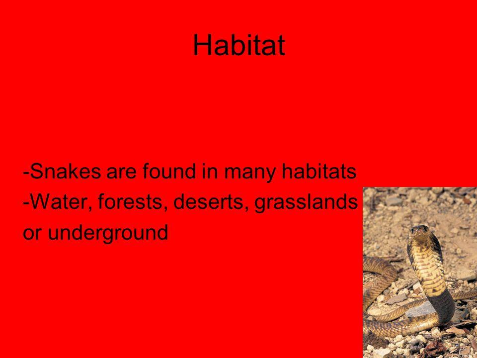 Habitat -Snakes are found in many habitats
