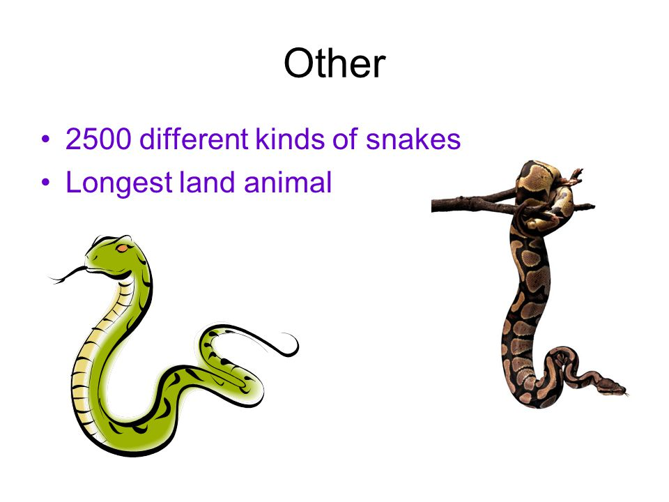 Other 2500 different kinds of snakes Longest land animal