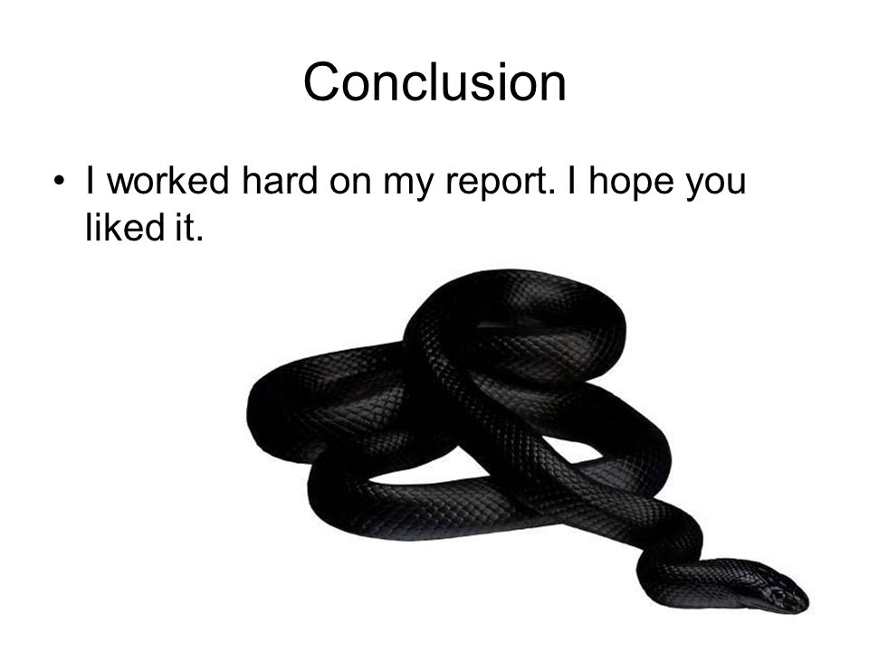 Conclusion I worked hard on my report. I hope you liked it.