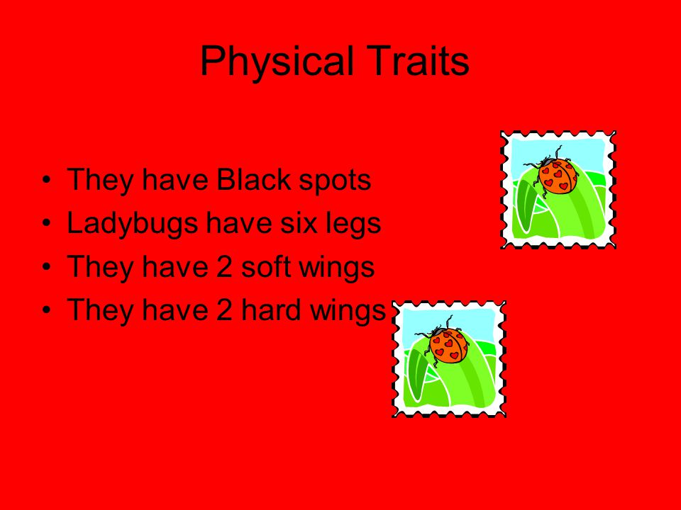 Physical Traits They have Black spots Ladybugs have six legs
