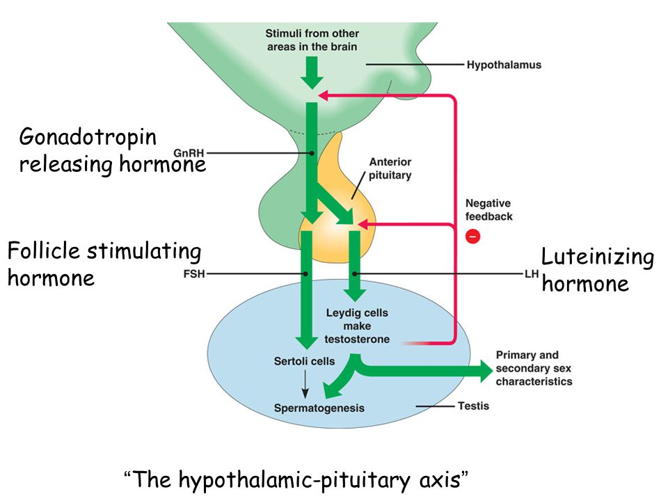 Gonadotropin releasing hormone. Follicle stimulating hormone.