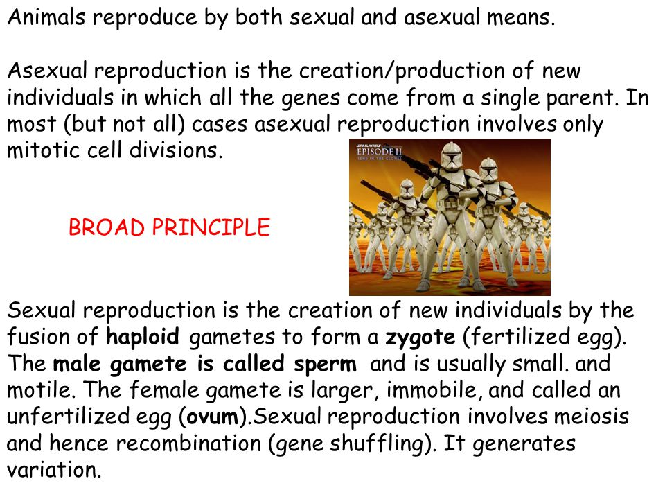Animals reproduce by both sexual and asexual means.