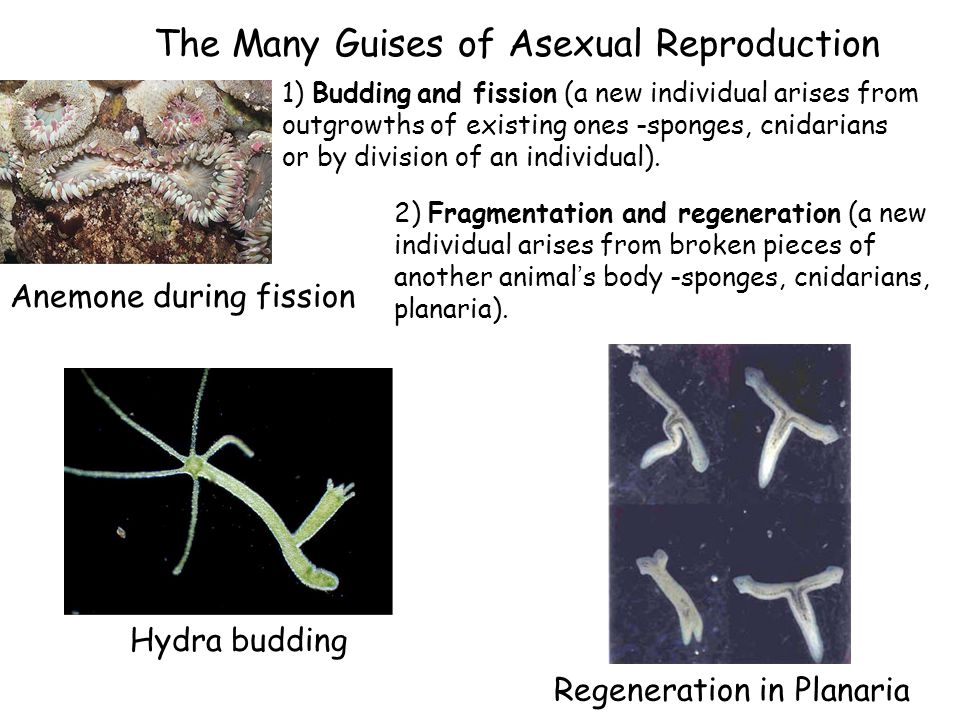 The Many Guises of Asexual Reproduction
