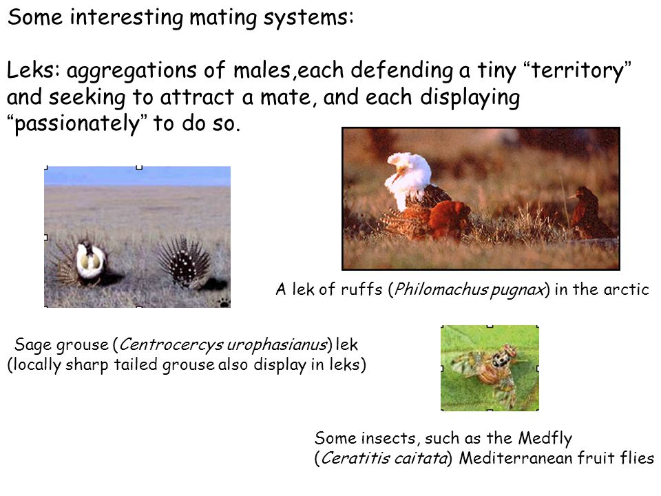Some interesting mating systems: