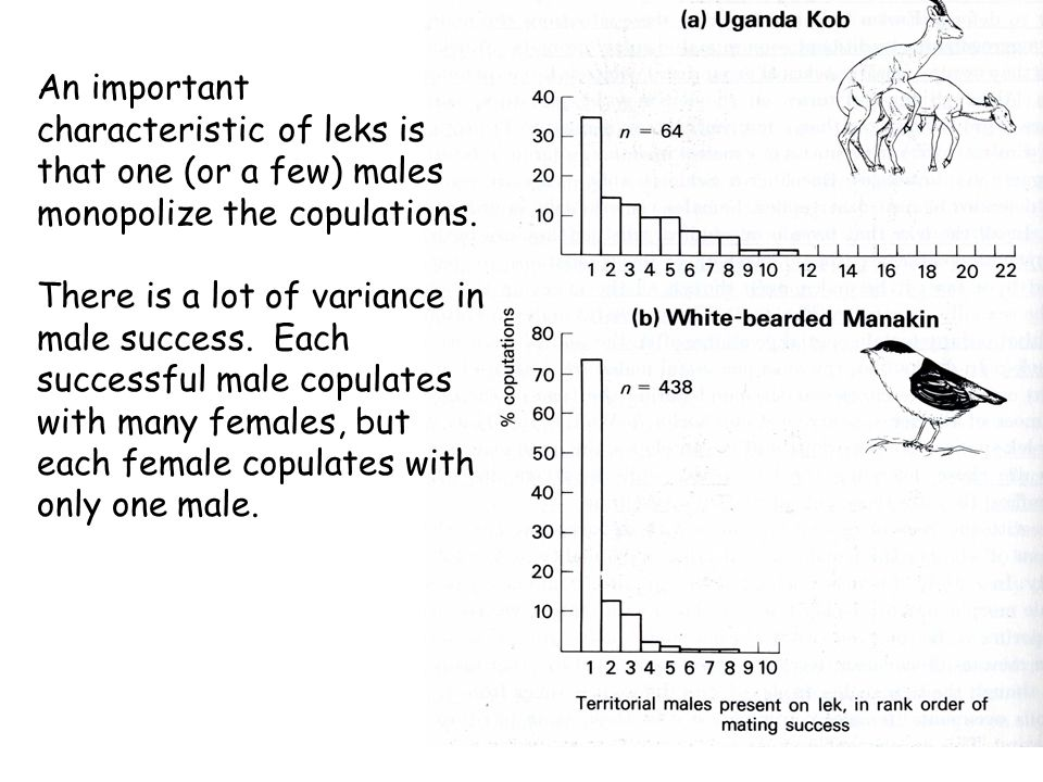 An important characteristic of leks is that one (or a few) males monopolize the copulations.