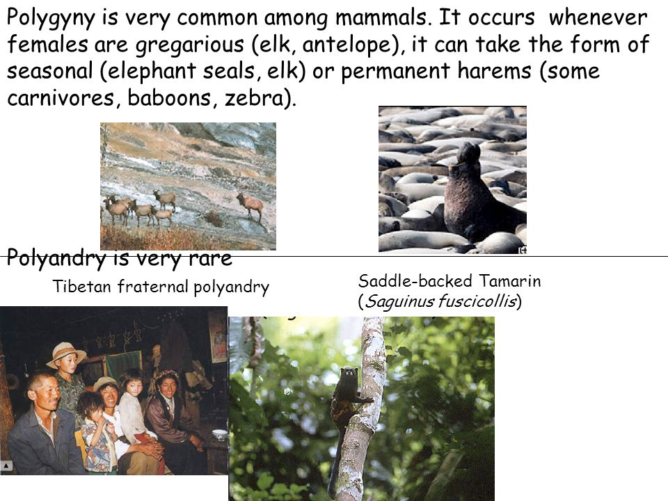 Polygyny is very common among mammals