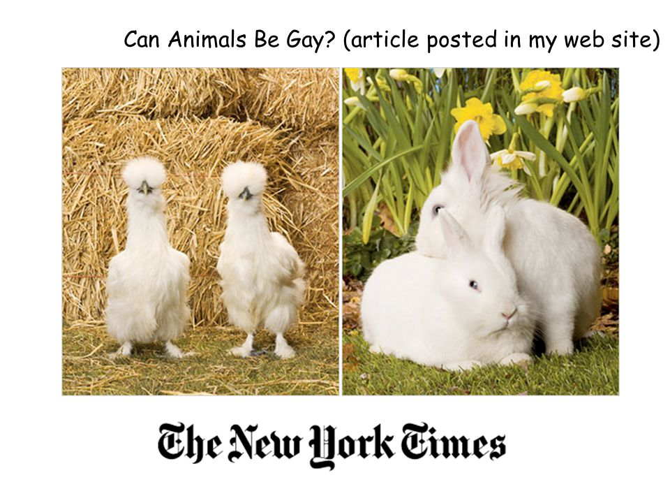 Can Animals Be Gay (article posted in my web site)