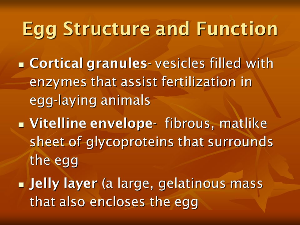 Egg Structure and Function