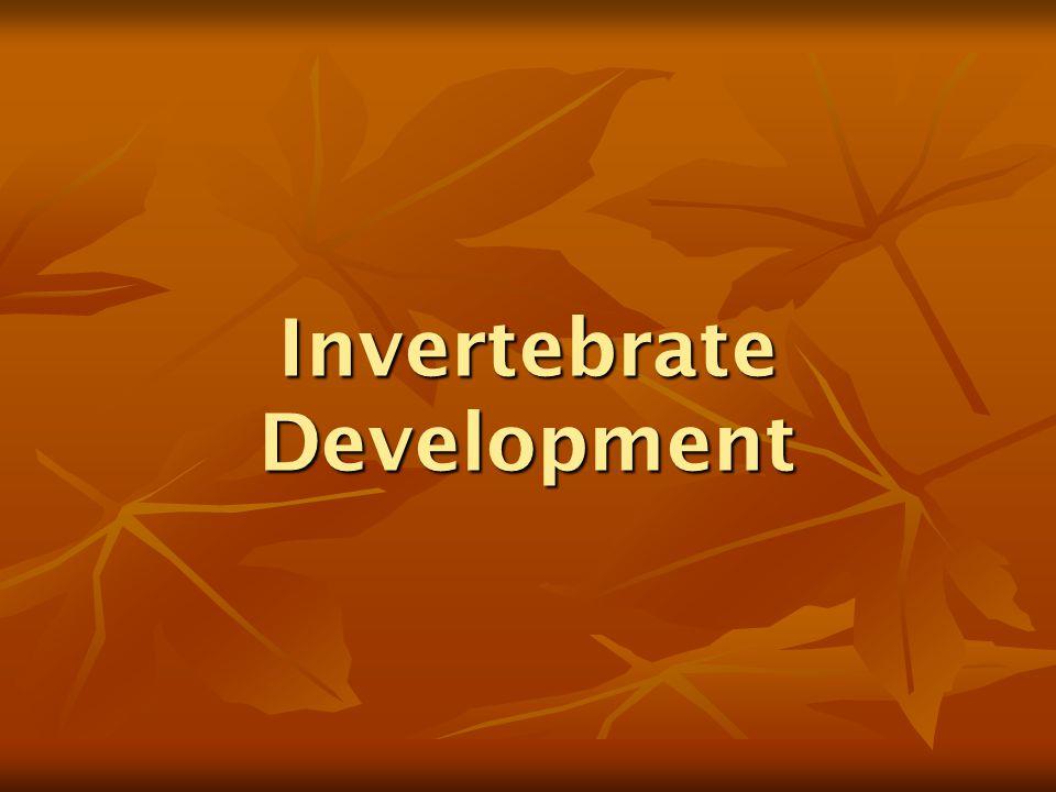 Invertebrate Development