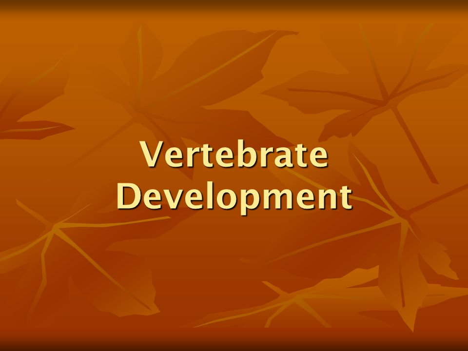 Vertebrate Development
