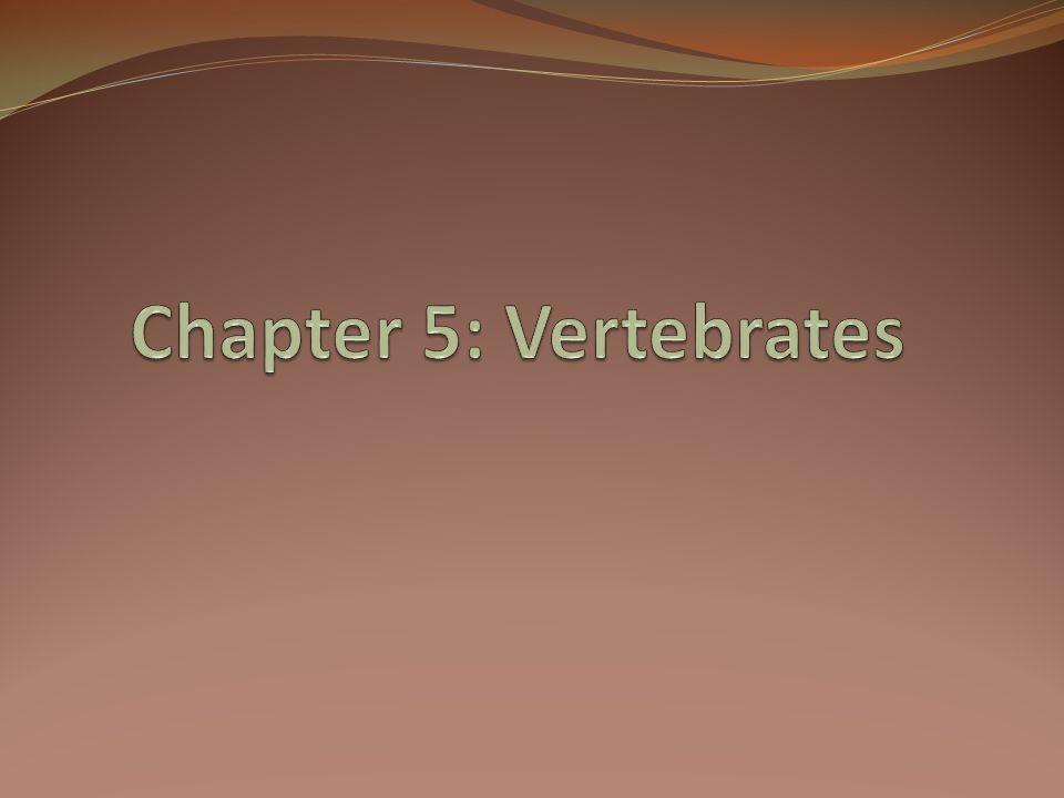 Chapter 5: Vertebrates