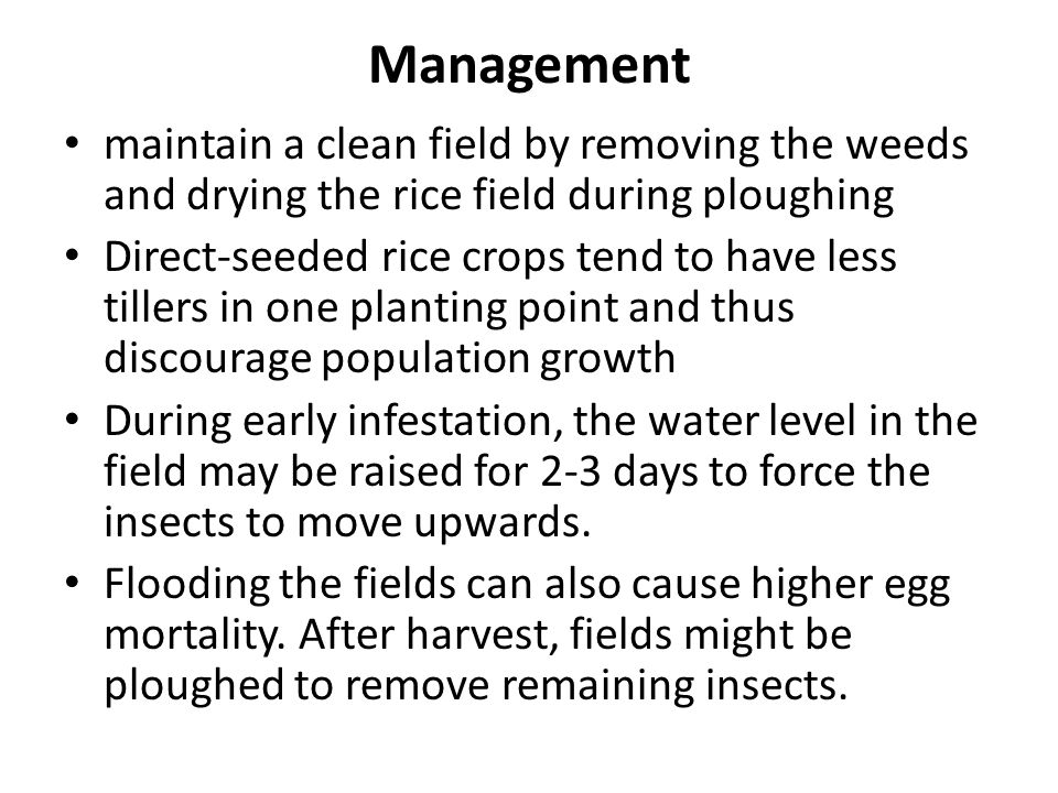 Management maintain a clean field by removing the weeds and drying the rice field during ploughing.
