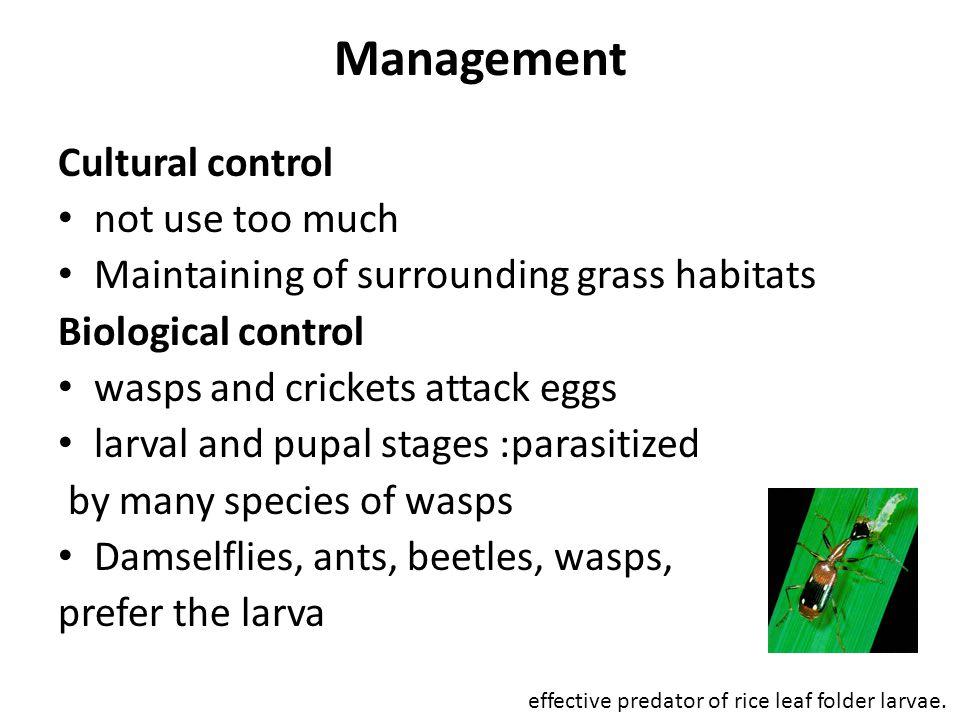 Management Cultural control not use too much