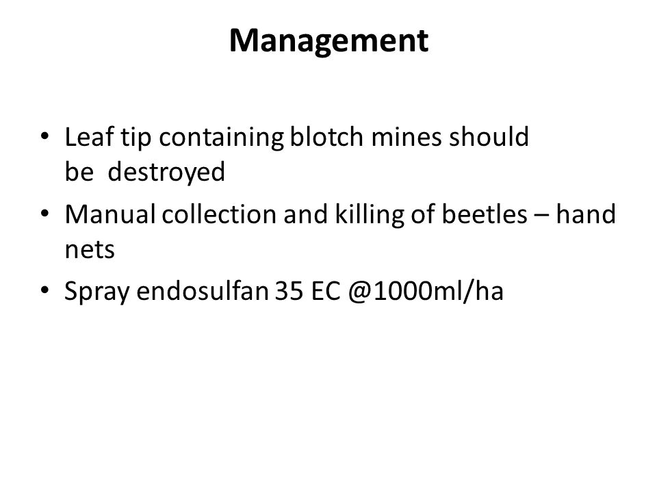 Management Leaf tip containing blotch mines should be destroyed