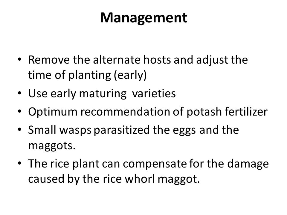 Management Remove the alternate hosts and adjust the time of planting (early) Use early maturing varieties.